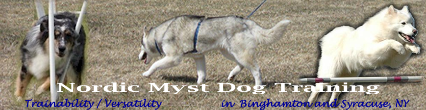 Nordic Myst Dog Training
